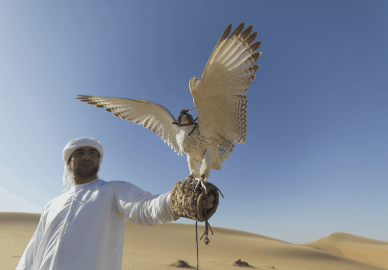 Man in arab dress holding a falcon