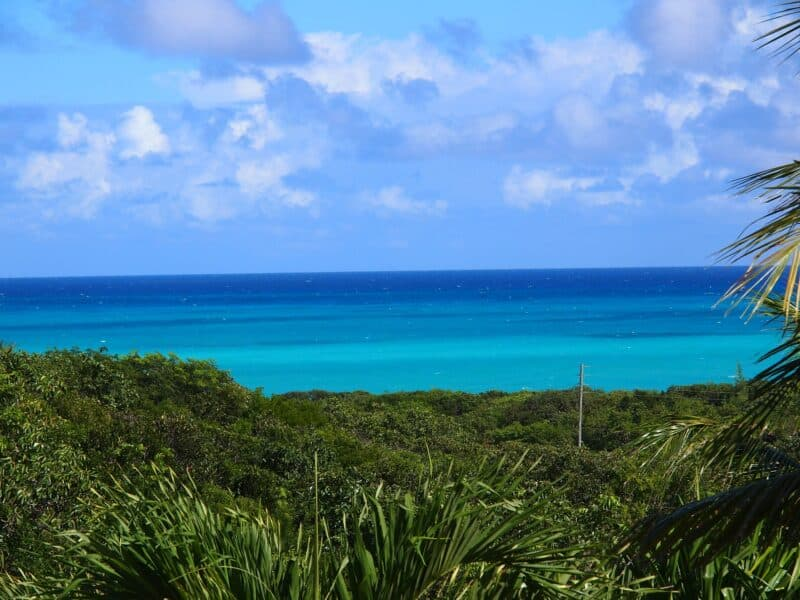 Bimini Bahamas flora with ocean and sky on the horizon