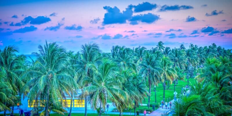 Day trips to Miami featured photo including palm trees and a cloud laden sunset