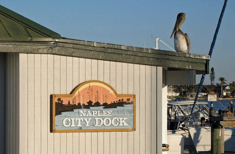 Pelican atop Naples City Dock