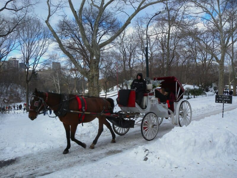horse drawn carriage in a snowy Central Park