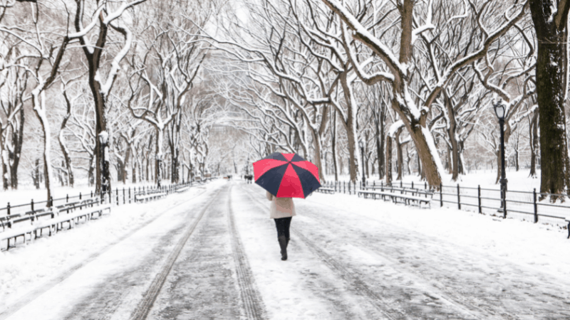 rear view of a person holding a red and black umbrella and walking down a snowy road in Central Park