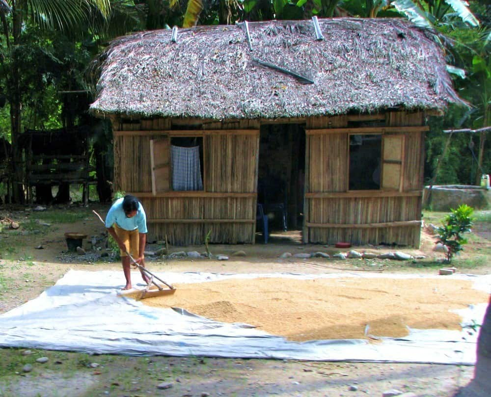 Drying rice Kolbano house