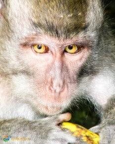 Ubud - Monkeys, Markets, and Rice