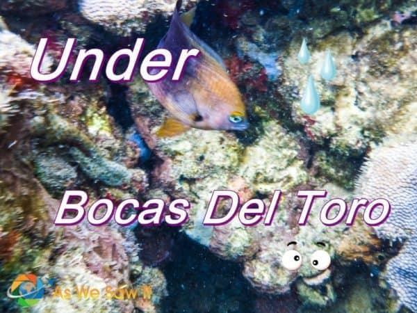 Under Bocas Del Toro - A Snorkeling Trip.